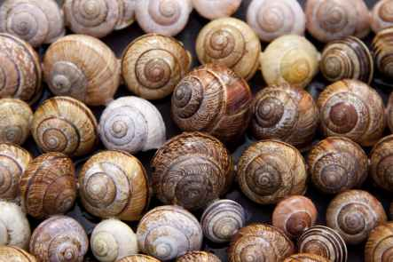 assorted color of snails